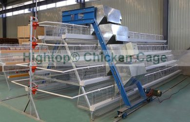 A Type Battery Cage with Automatic Feeding System