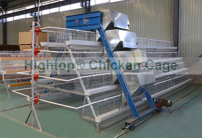 poultry battery cage with Automatic Feeding System