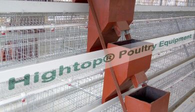 Automatic Poultry Farm in Kenya