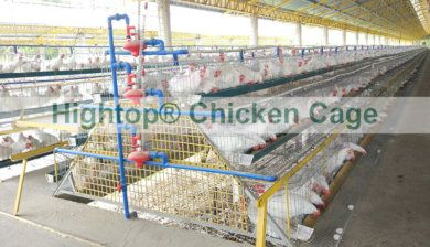 Chicken Cage in the Philippines