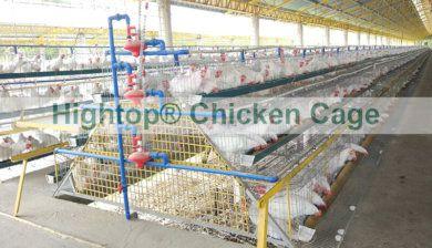 Chicken Cage in Philippines