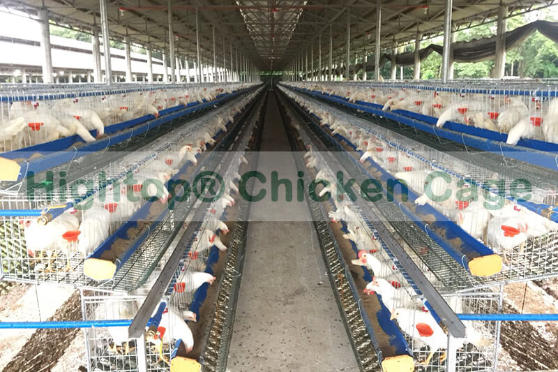 Poultry Farm in Philippines commercial chicken houses