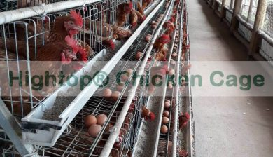 Small Poultry Farm in Uganda