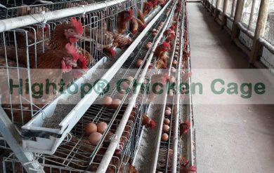 Small Poultry Farm in Uganda