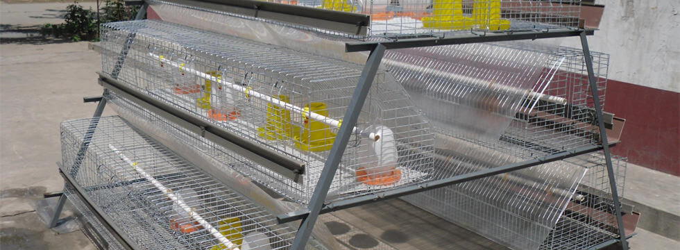 a frame baby chicken cage