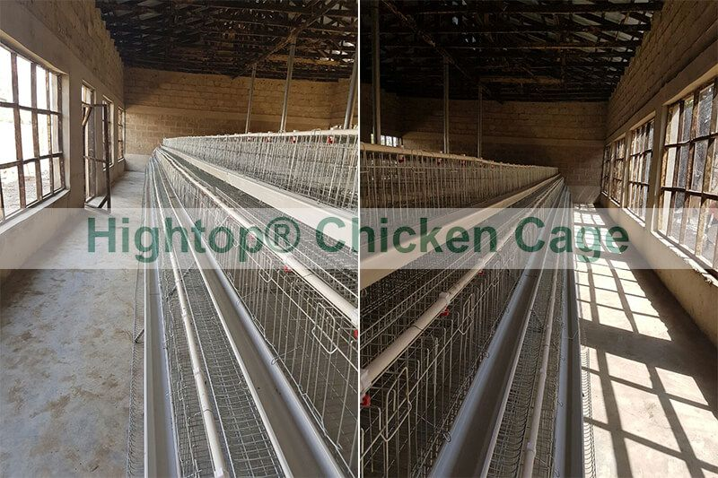 battery cage in Nigeria
