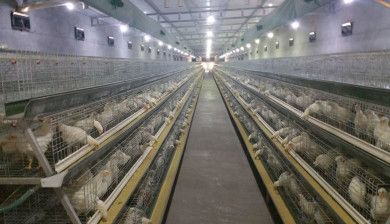 Poultry Farm Project in Domestic