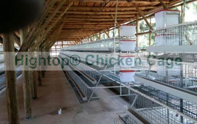 chicken cage in Uganda