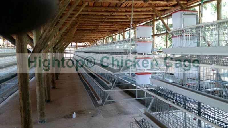 chicken cage in Uganda