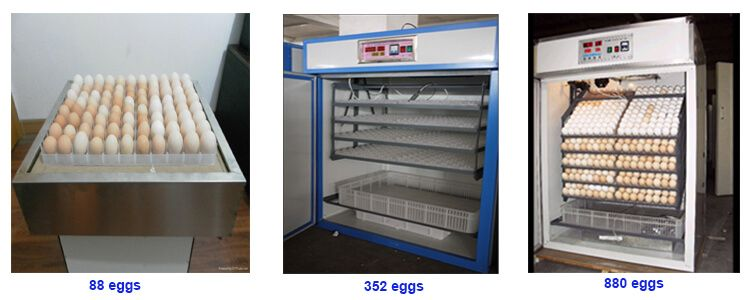 diffrent size of chicken egg incubator