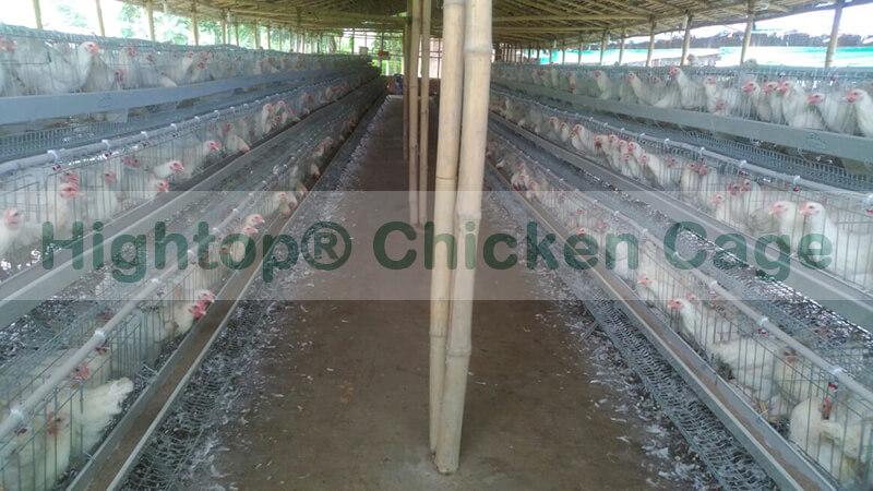 egg farming business