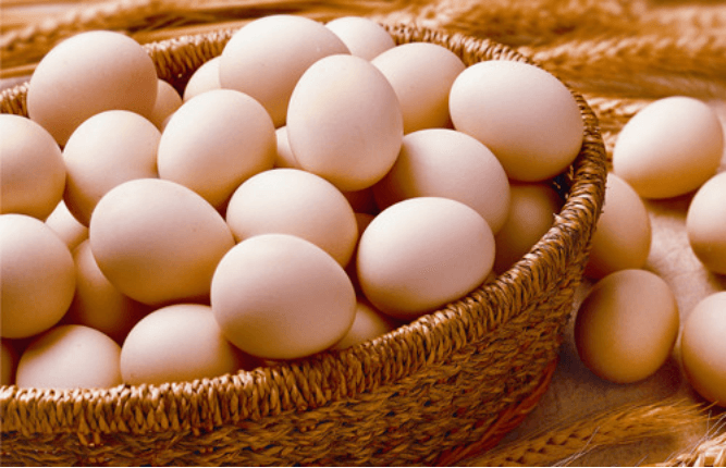 how to start your own chicken egg farm