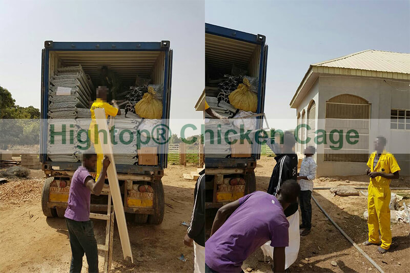 layer chicken cage in Nigeria