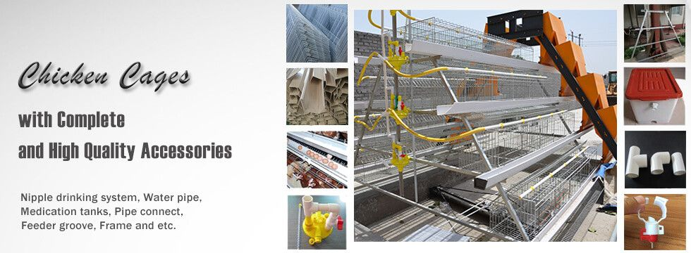 poultry cage layer cage