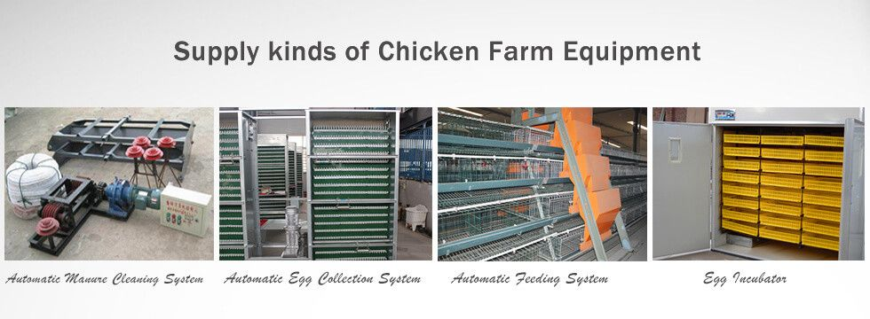 poultry farm equipment